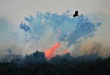 queimadas Pantanal Amazônia