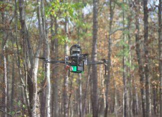 mapear a floresta