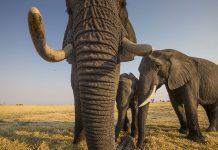 elefantes national geographic