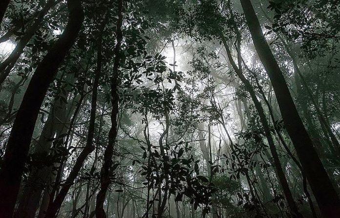 estudo florestas tropicais temperaturas