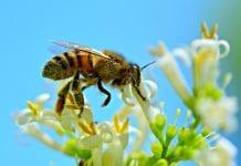 abelhas agricultura