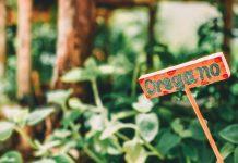 horta caseira de temperos