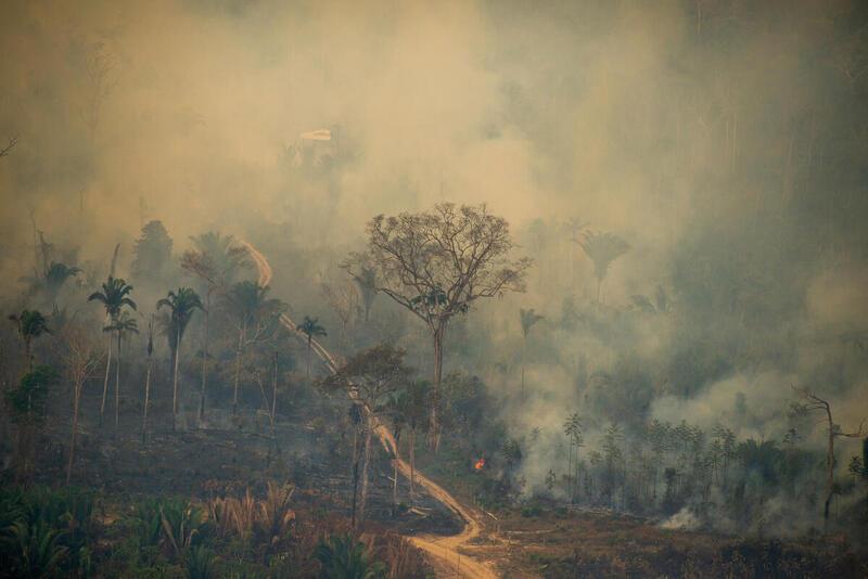 fogo ilegal pantanal amazônia
