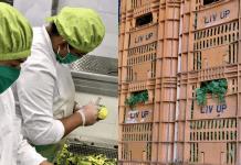 liv up doação de orgânicos