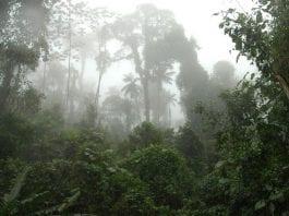 vegetação nativa são paulo