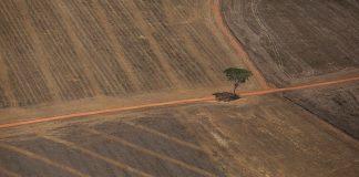 desmatamento Amazônia prejuízo agronegócio