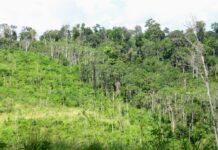 regeneração da Amazônia