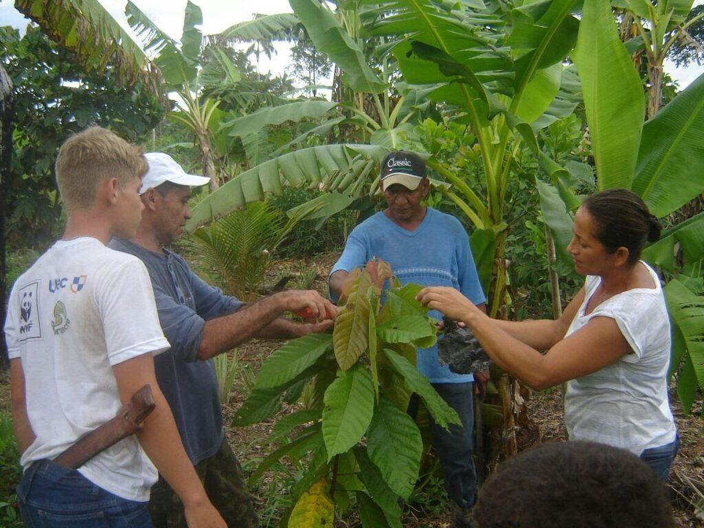 agrofloresta Amazônia