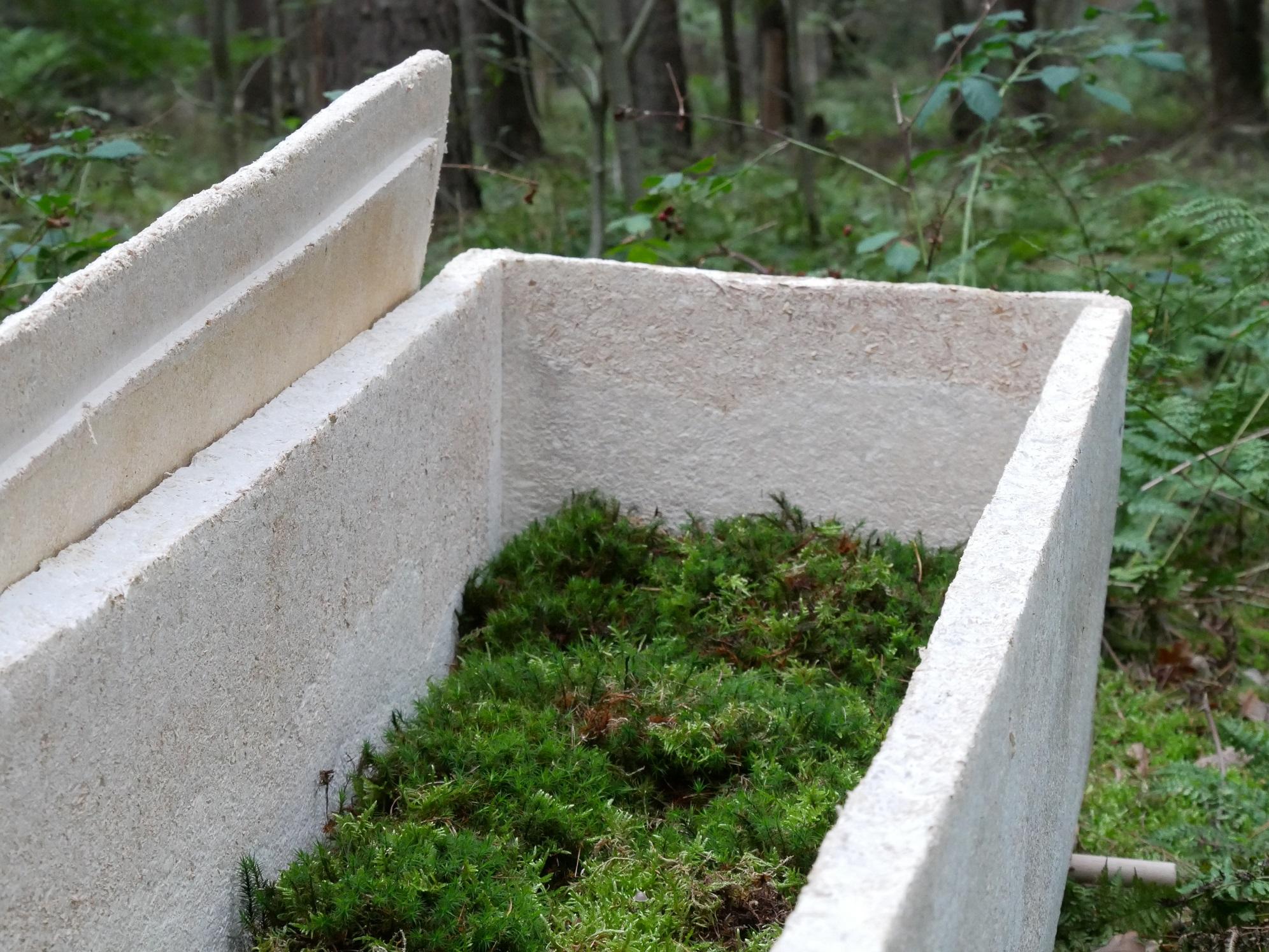 caixão micélio