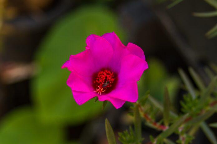 flores para cultivar