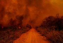 boicote europeus Brasil queimadas