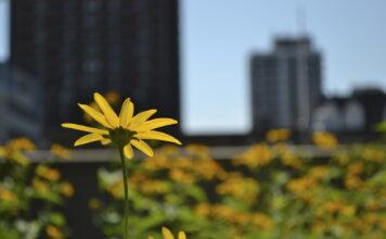 cidades mais sustentáveis