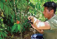 manual etnobotânica povos indígenas