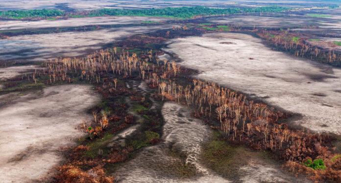 Amazônia desmatamento pandemia