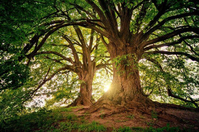 dicas instituto akatu dia da árvore