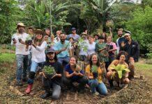 curso gratuito de agrofloresta