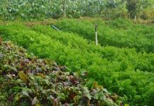 CaipiraTech agricultores comércio online