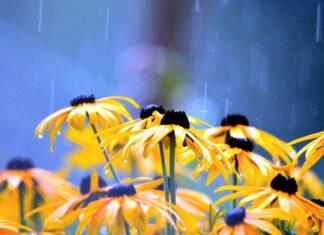 jardins de chuva vila nova conceição
