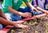 educação ambiental programa clorifila