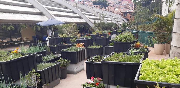 Horta AgroFavela-ReFazenda