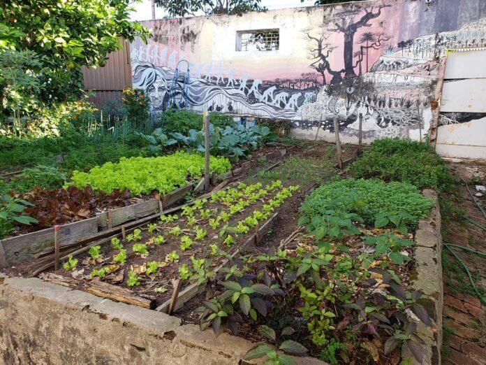 horta orgânica SP