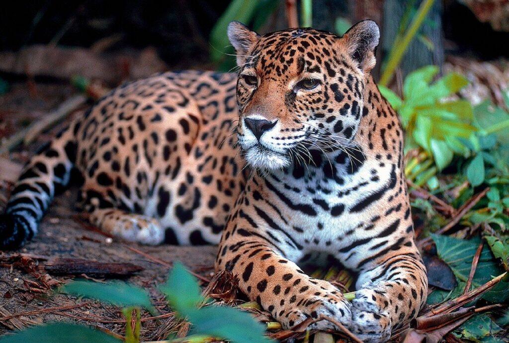 brasil não assina compromisso ambiental