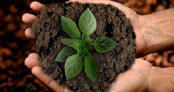 workshop escolhas sustentáveis permacultura