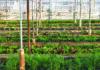 agricultura urbana são paulo