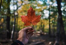 canadá emissões zero