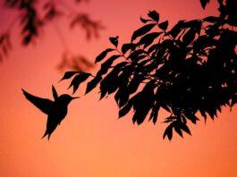árvores que atraem pássaros