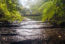 projetos de proteção da natureza