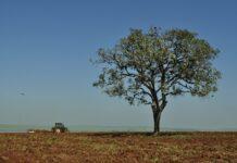 propriedades rurais são paulo