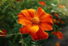 flor verão