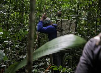 Origens Brasil comércio sustentávelAmazônia