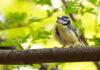 pássaros felicidade