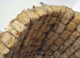 tijolo de cogumelo
