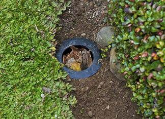 biopori túnel no solo