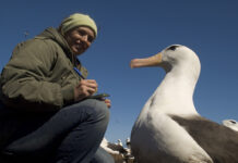 projeto albatroz
