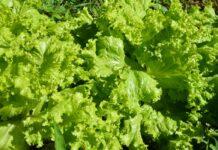 alimentos agroecologicos