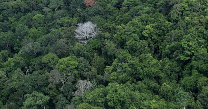 crescimento de árvores