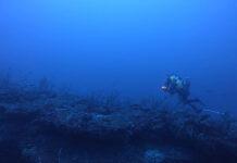 peixes Fernando de Noronha