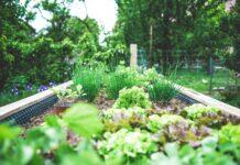 jardim sensorial em casa