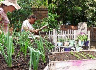 quintais sustentáveis