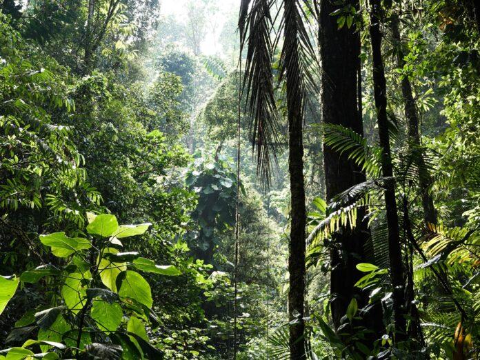DNA florestal