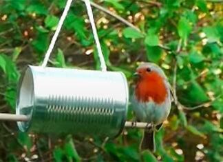 lata comedor pássaros