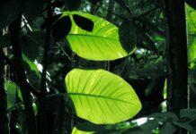 aulas online de Botânica