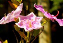 espécies flora Brasil