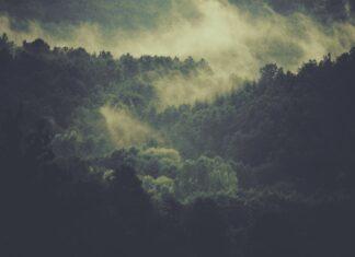 proteção florestas