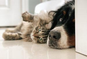 castração animais de estimação