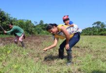 mulheres plantio amazônia
